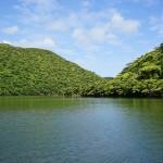 沖縄・西表島の写真 浦内川のマングローブ